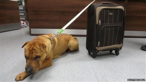 Abandoned dog dumped at Scottish railway station with all