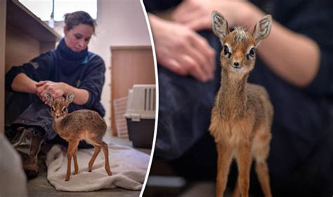 Chester Zoo keepers help raise adorable orphaned young