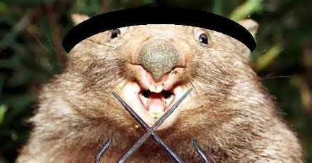 Cute Funny Animalz: Funny Wombat 2013 Best Images