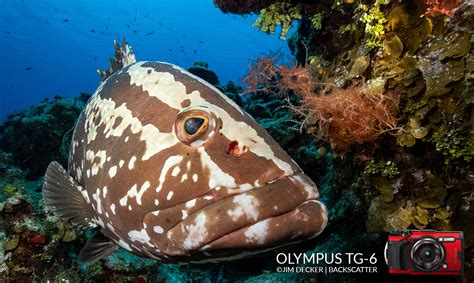 Olympus TG-6 Review: The Easiest Underwater Compact Camera